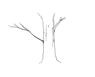 Mother tree, (a white  drawing of a tree outlined in black).